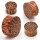 Holz Plug - Kokos Holz